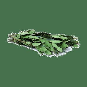 Louro-Un-2046